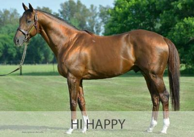 Hi Happy